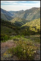 Wildflowers and Rattlesnake Peak. San Gabriel Mountains National Monument, California, USA ( color)