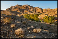 Bonanza Springs and Clipper Mountains. Mojave Trails National Monument, California, USA ( color)