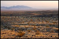Fenner Valley at sunset. Mojave Trails National Monument, California, USA ( color)