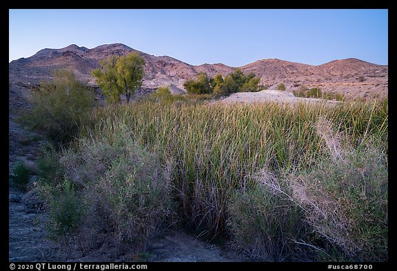 Desert riparian environment in Bonanza Springs. Mojave Trails National Monument, California, USA (color)