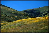 Gorman Hills in the spring. California, USA (color)