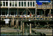 Tourists watching Sea Lions at Pier 39, afternoon. San Francisco, California, USA ( color)