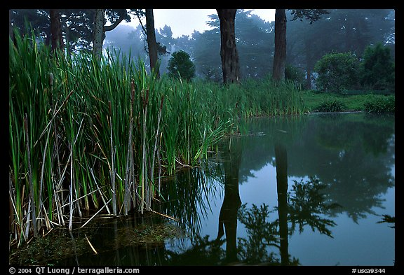 Pond reflections in fog, Golden Gate Park. San Francisco, California, USA (color)