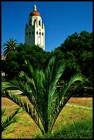 Hoover tower. Stanford University, California, USA ( color)