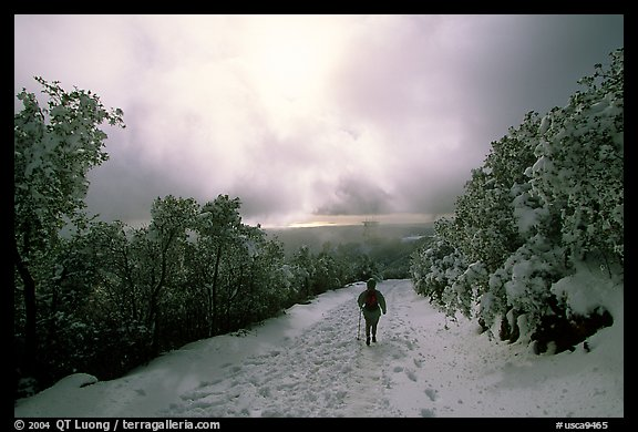 Summit trail after a snow-storm, Mt Diablo State Park. California, USA (color)