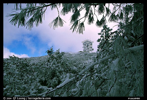Radar station framed by snow-covered branches, Mt Diablo State Park. California, USA (color)