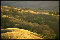 Hills, Joseph Grant County Park. San Jose, California, USA ( color)