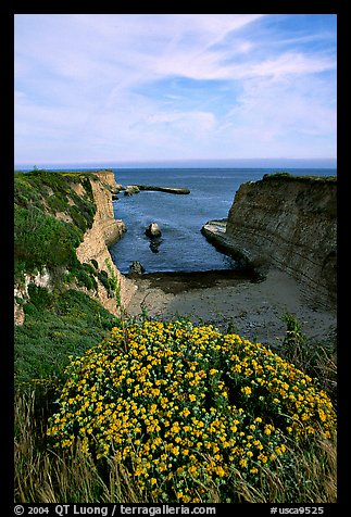 Wildflowers and cliffs, Wilder Ranch State Park, afternoon. California, USA (color)