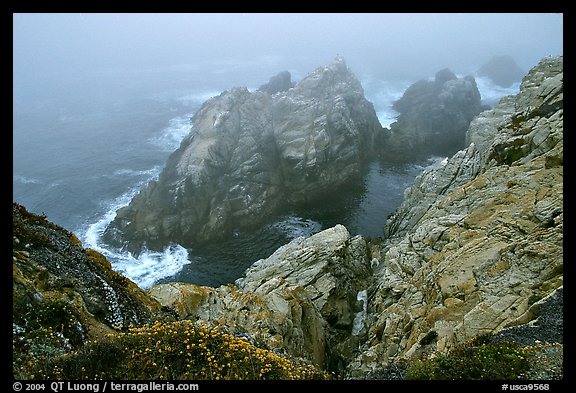 Pinnacle Cove with fog. Point Lobos State Preserve, California, USA (color)