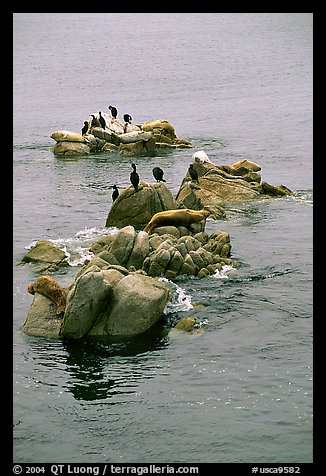 Rocks with birds and seals. Pacific Grove, California, USA (color)
