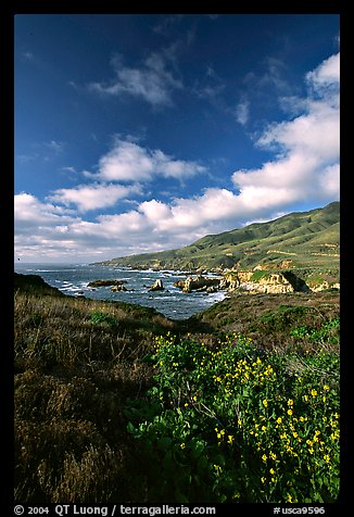 Wildflowers and rocky coast, Garapata State Park. Big Sur, California, USA (color)