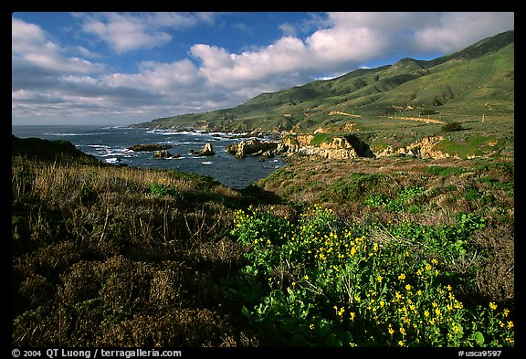 Wildflowers and jagged coast, Garapata State Park. Big Sur, California, USA (color)