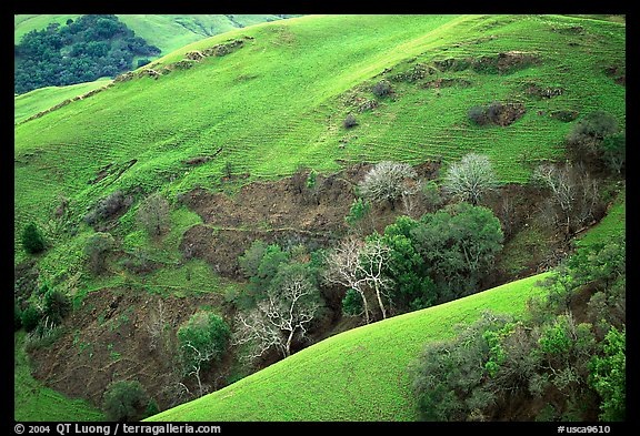 Rolling Hills in spring near San Luis Obispo. Morro Bay, USA (color)