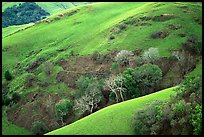 Rolling Hills in spring near San Luis Obispo. Morro Bay, USA ( color)