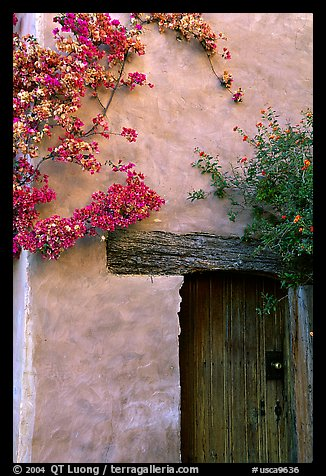 Flowers and wall, Carmel Mission. Carmel-by-the-Sea, California, USA (color)
