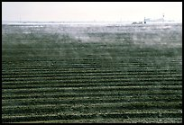 Mist and plowed field, San Joaquin Valley. California, USA ( color)