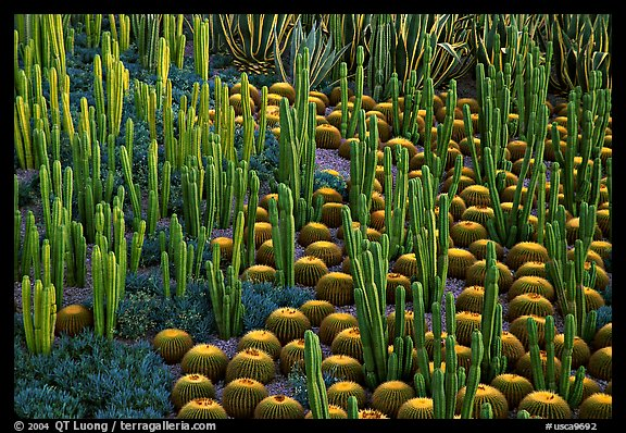 Decorative cactus on terrace of Getty Museum, dusk, Brentwood. Los Angeles, California, USA (color)