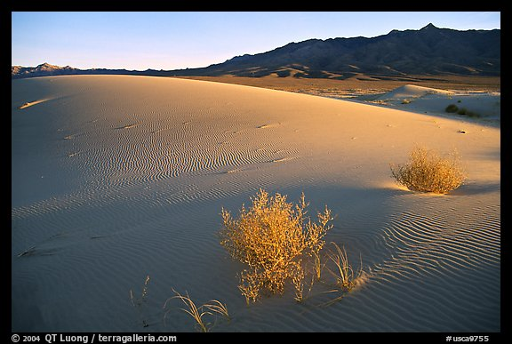 Kelso Dunes, sunset. Mojave National Preserve, California, USA (color)