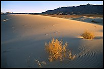Kelso Dunes, sunset. Mojave National Preserve, California, USA ( color)