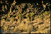 Desert plants and rock formations, Hole-in-the-Wall. Mojave National Preserve, California, USA (color)