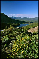 Flowers and Red Lake in the distance. Mokelumne Wilderness, Eldorado National Forest, California, USA