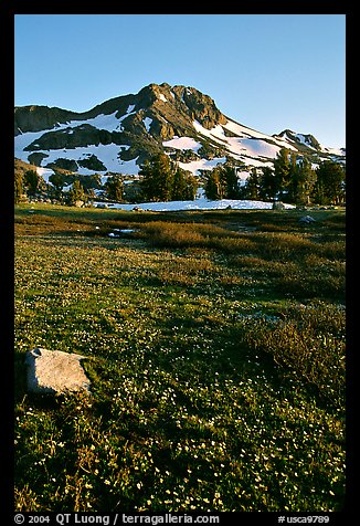 Meadow carpeted with flowers below Round Top Peak. Mokelumne Wilderness, Eldorado National Forest, California, USA (color)