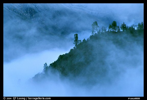 Trees and ridge in fog,  Stanislaus  National Forest. California, USA (color)