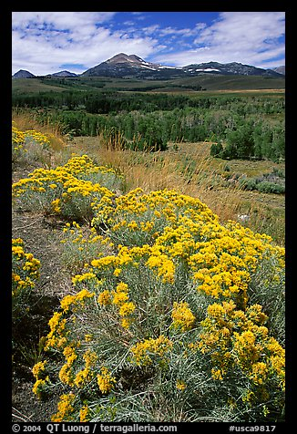 Sagebrush and Sierra, Conway summit. California, USA (color)