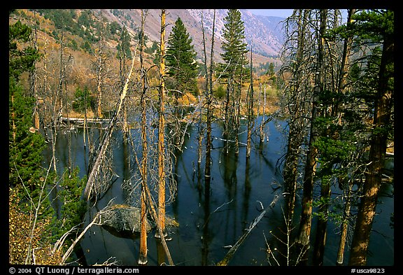Beaver Pond, Lundy Canyon, Inyo National Forest. California, USA (color)