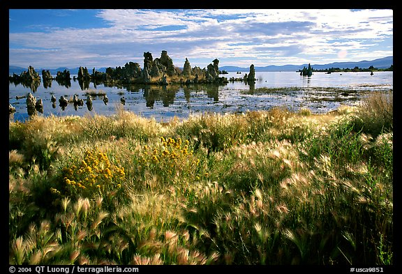 Grasses and Tufa towers, morning. Mono Lake, California, USA (color)