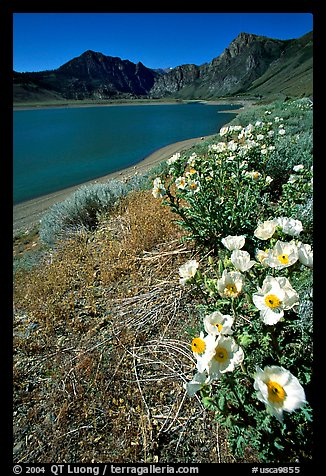 Flowers on the shores of June Lake. California, USA (color)