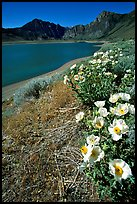 Flowers on the shores of June Lake. California, USA