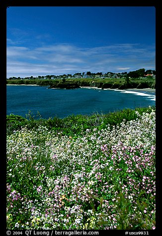 Spring wildflowers and Ocean. Mendocino, California, USA (color)