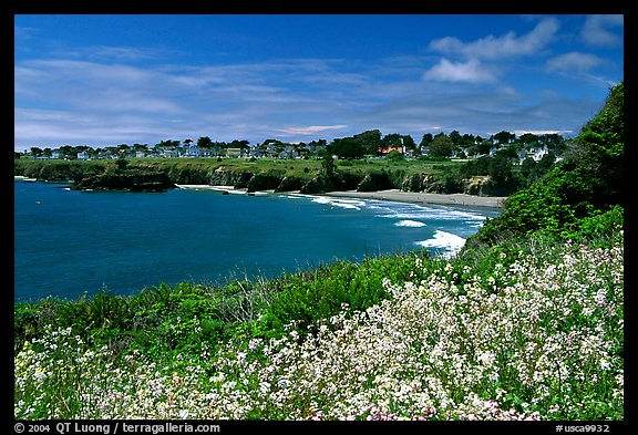 Spring wildflowefrs and Ocean, town on a bluff. Mendocino, California, USA (color)