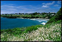 Spring wildflowefrs and Ocean, town on a bluff. Mendocino, California, USA ( color)