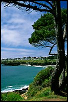 Tree, ocean, town on a bluff. Mendocino, California, USA ( color)