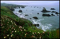 Iceplant and coast near Ocean View. Sonoma Coast, California, USA