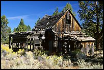 Abandoned wooden cabin. California, USA (color)