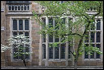 Spring leaves, blooms, and facade detail. Yale University, New Haven, Connecticut, USA (color)