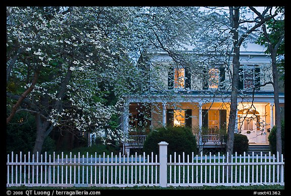 White picket fence, dogwoods, and house at dusk, Old Lyme. Connecticut, USA (color)