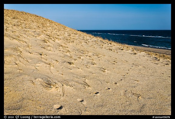 Sand dune and ocean, early morning, Coast Guard Beach, Cape Cod National Seashore. Cape Cod, Massachussets, USA (color)