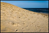 Sand dune and ocean, early morning, Coast Guard Beach, Cape Cod National Seashore. Cape Cod, Massachussets, USA ( color)