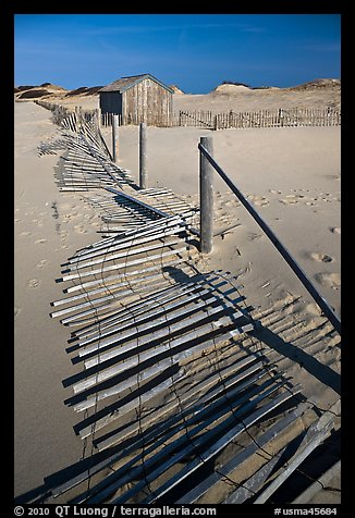 Fallen sand barrier, Cape Cod National Seashore. Cape Cod, Massachussets, USA (color)