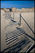 Fallen sand barrier, Cape Cod National Seashore. Cape Cod, Massachussets, USA ( color)