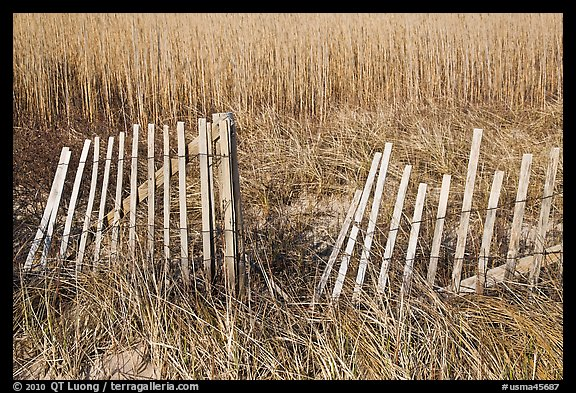 Fence and tall grass, Cape Cod National Seashore. Cape Cod, Massachussets, USA (color)