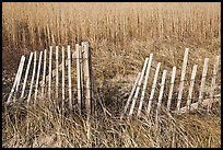Fence and tall grass, Cape Cod National Seashore. Cape Cod, Massachussets, USA ( color)