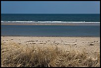 Grass, beach, and sand bar, Cape Cod National Seashore. Cape Cod, Massachussets, USA ( color)