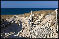 Path to beach and ocean framed by sand fences, Cape Cod National Seashore. Cape Cod, Massachussets, USA ( color)