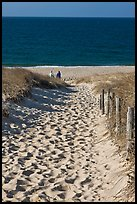 Path to ocean through dunes and tourists, Cape Cod National Seashore. Cape Cod, Massachussets, USA ( color)