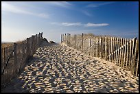 Path between sand fences, Cape Cod National Seashore. Cape Cod, Massachussets, USA ( color)